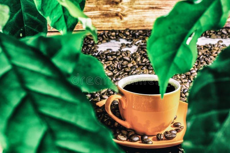 Café avec des feuilles images stock