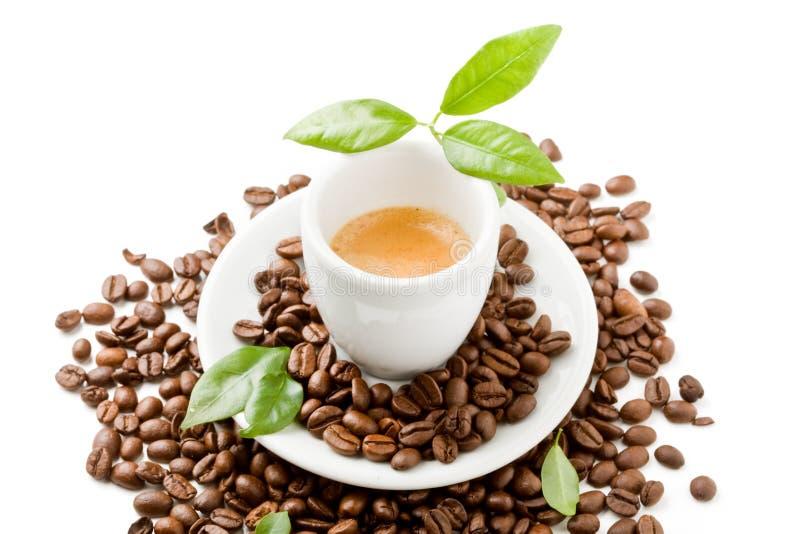 Café com as folhas do verde no fundo branco fotografia de stock royalty free