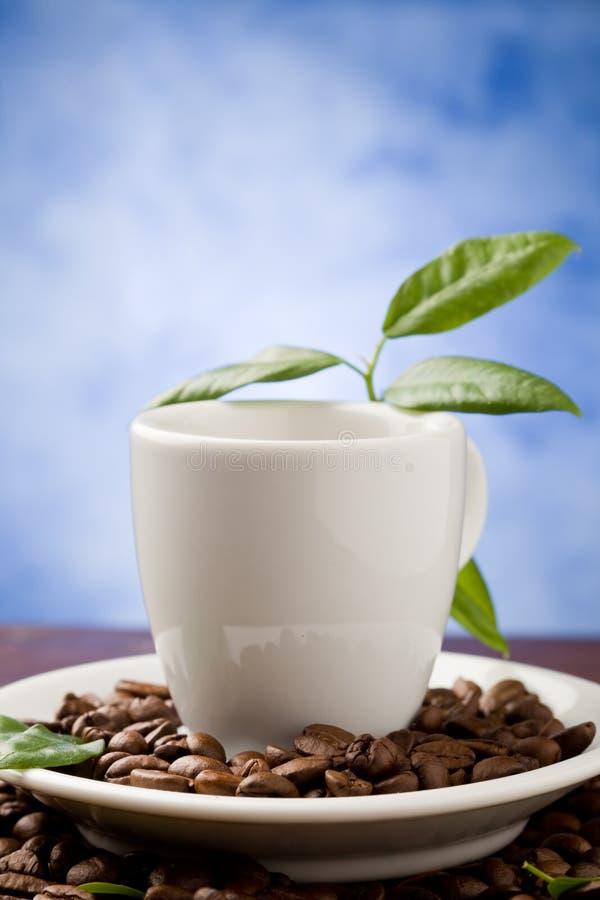 Café com folhas verdes foto de stock royalty free