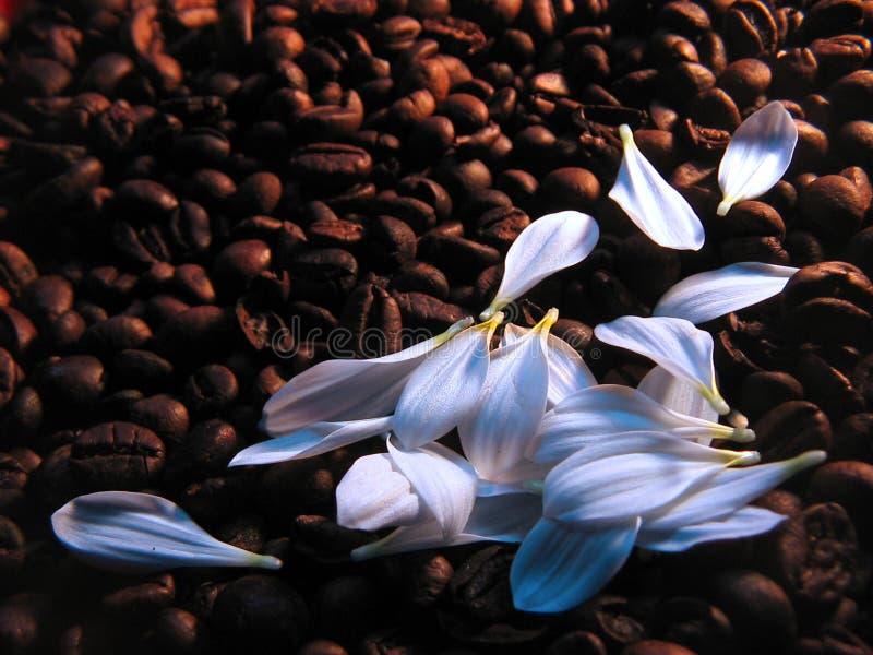 Café Com Leite Imagens de Stock Royalty Free