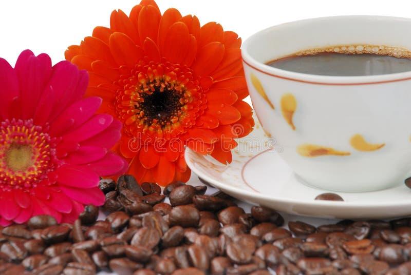 Café con gerbers imagen de archivo libre de regalías