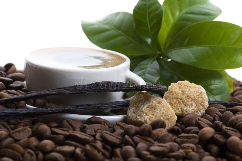 Café d'arome avec le branchement de vanille et de café photos libres de droits