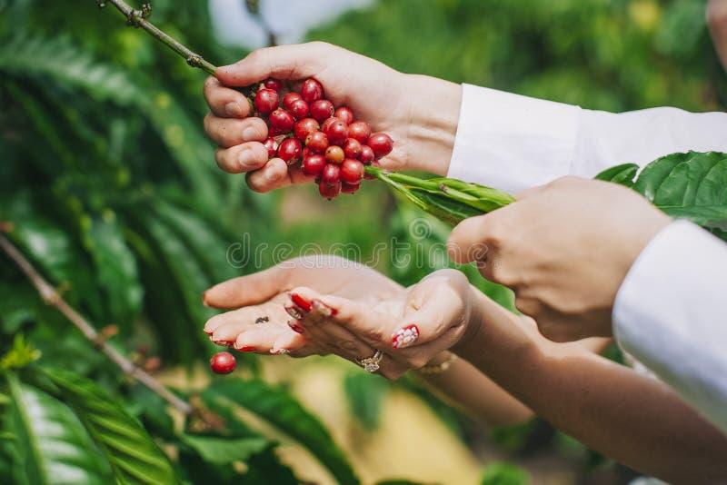 Café da colheita imagem de stock