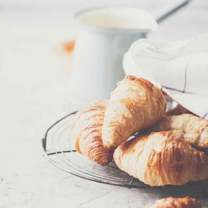 Café da manhã, croissant e tulipas da mola em claro - fundo cinzento foto de stock