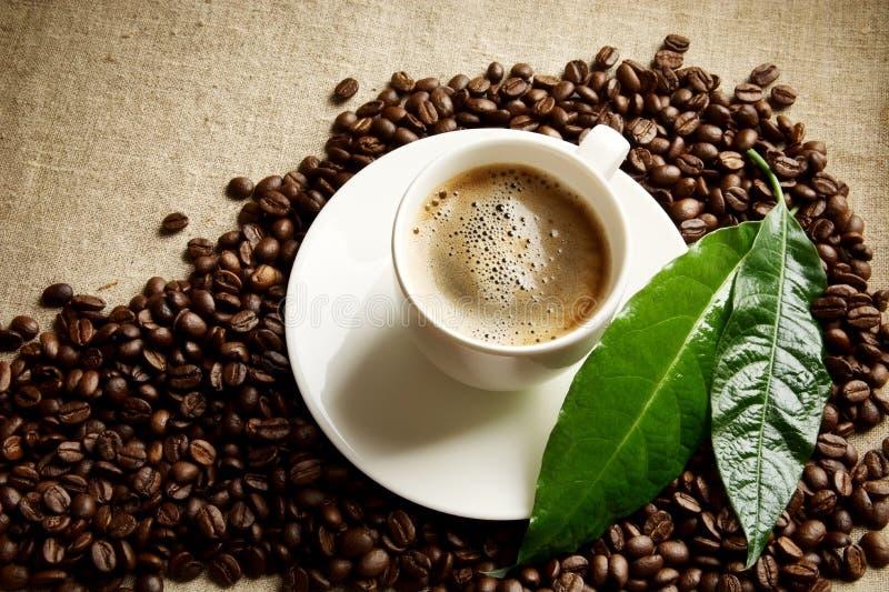 Download Café De //avec La Tasse De Mousse Avec Des Haricots Dans Le Coin Avec La Feuille Verte Sur La Toile Image stock - Image du coin, arabe: 56479185