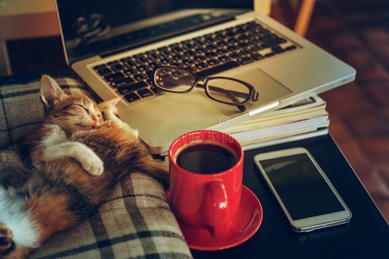 Café do gato do sono dois com portátil e tabuleta fotografia de stock