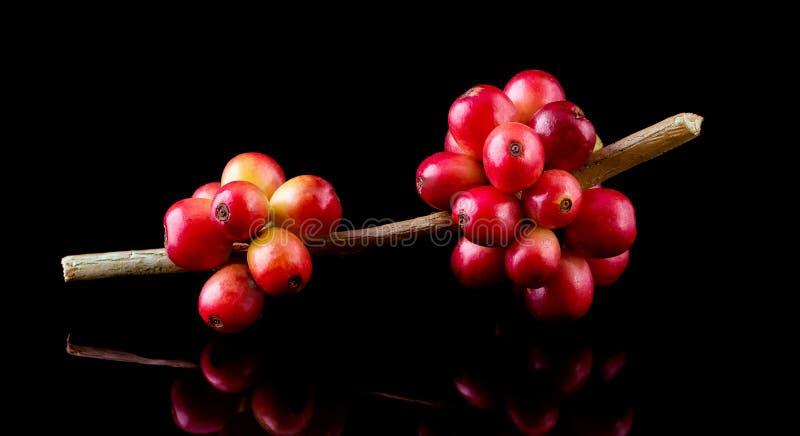 café e feijões de café maduros vermelhos no fundo preto fotos de stock royalty free