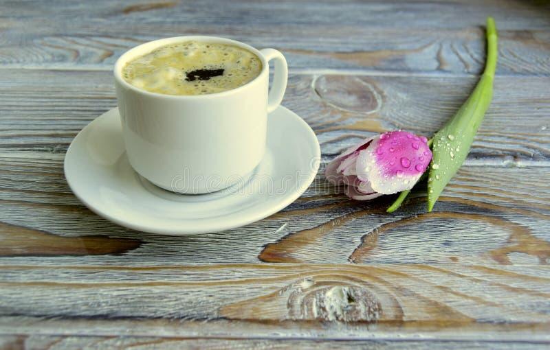 Café e tulipa imagem de stock