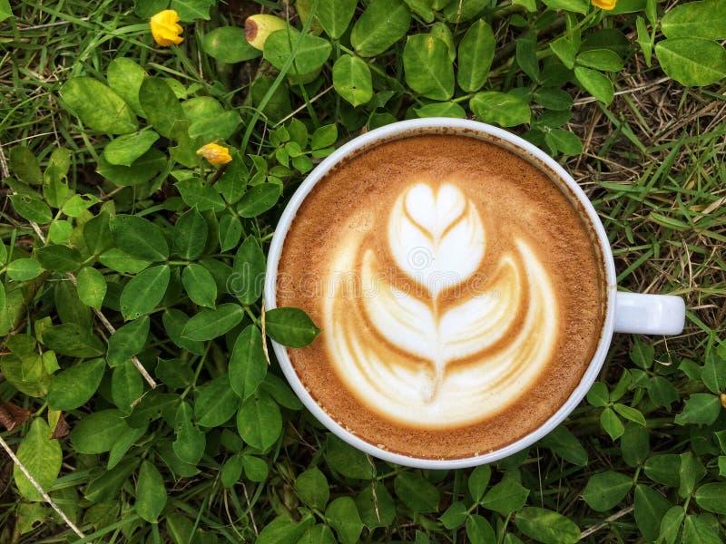Café en hierba verde y la flor amarilla imagen de archivo libre de regalías
