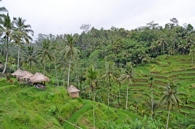 Café entre palmeiras bali indon?sia fotografia de stock