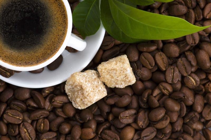 Café frais avec le branchement de café image stock