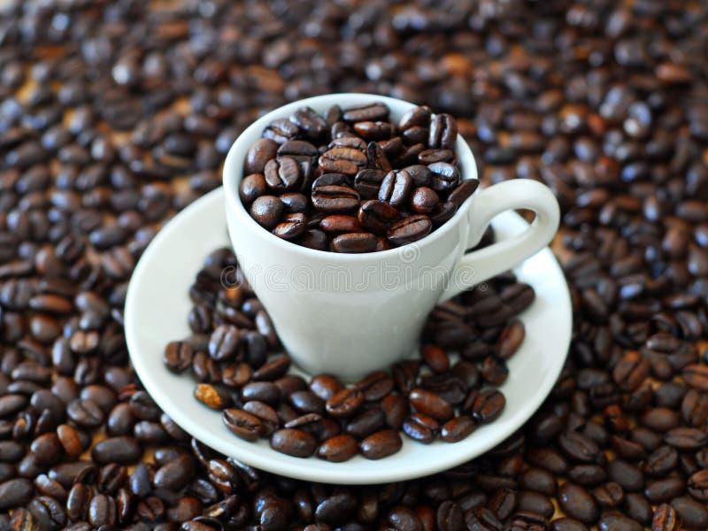 Café fresco imagen de archivo libre de regalías