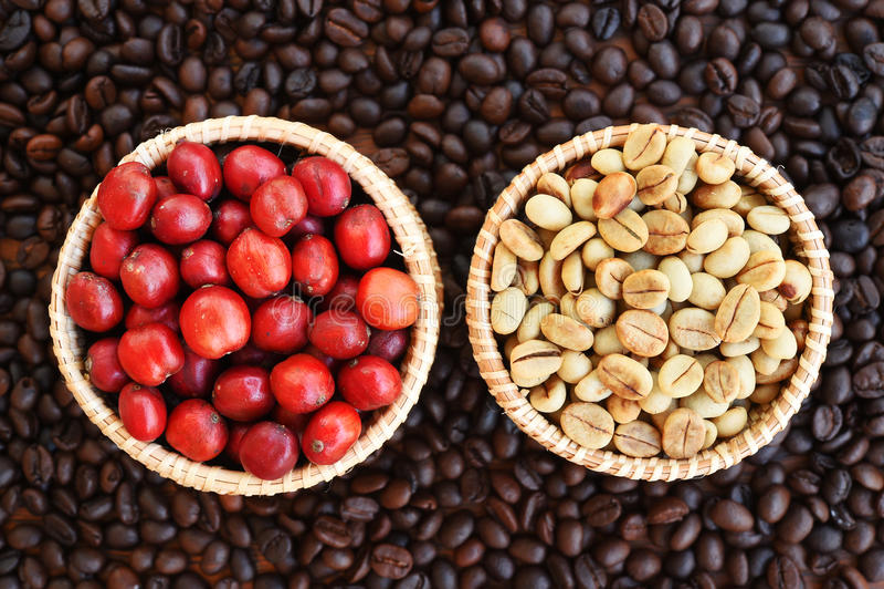 Café mûr rouge sur le backgournd de grains de café photographie stock