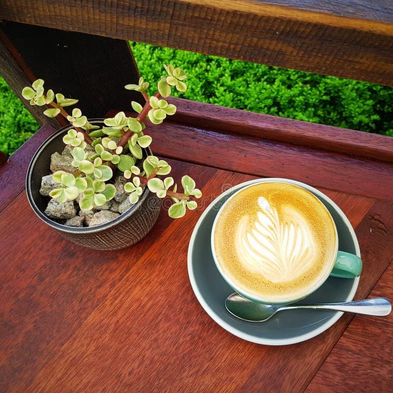 Café y succulant imagen de archivo