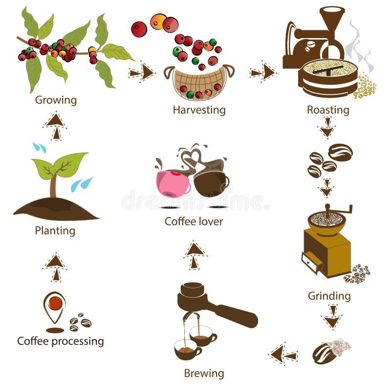 Caffè che elabora per gradi dal fagiolo all'amante del caffè fotografia stock