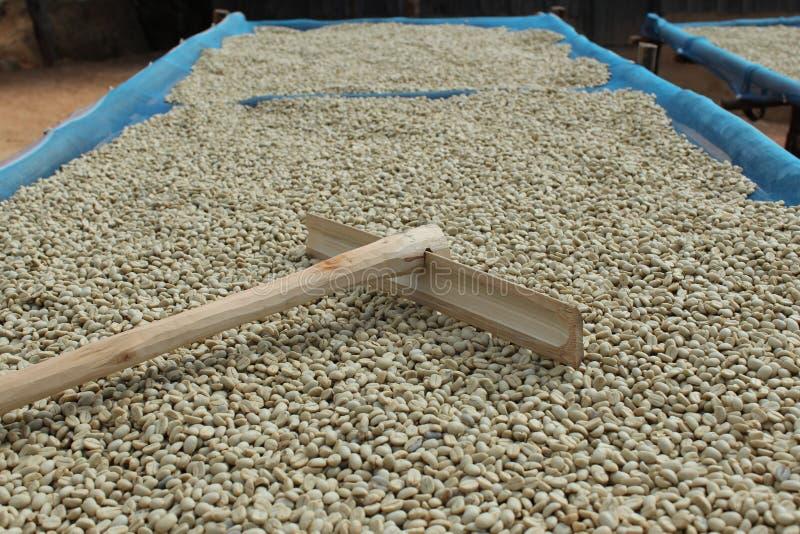 Caffè di secchezza. fotografie stock libere da diritti