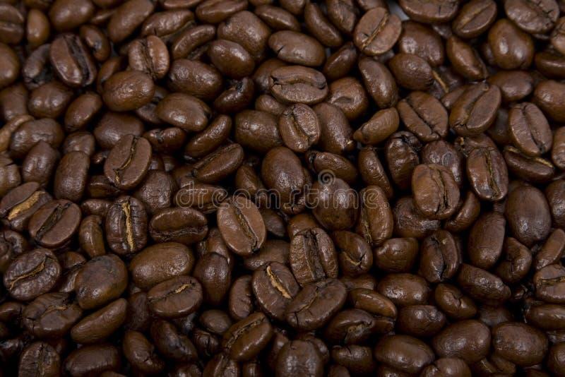 Caffè-fagioli fotografia stock