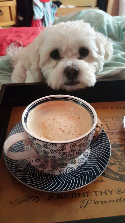 caffè per favore? fotografia stock