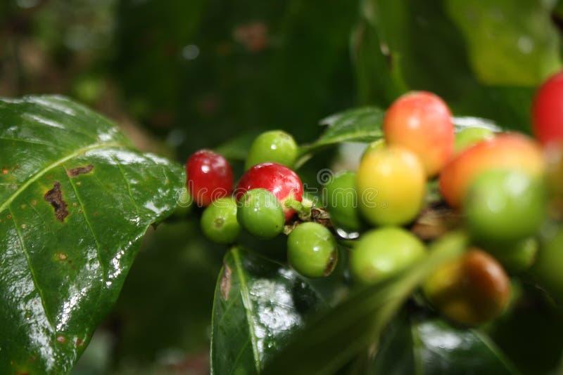 Caffe lizenzfreies stockbild