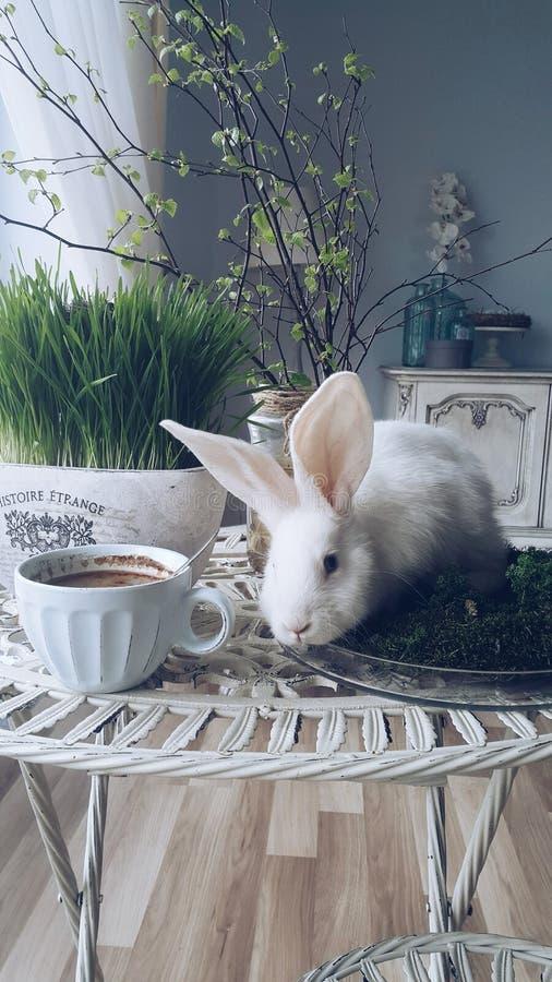 Caffe tid royaltyfria foton