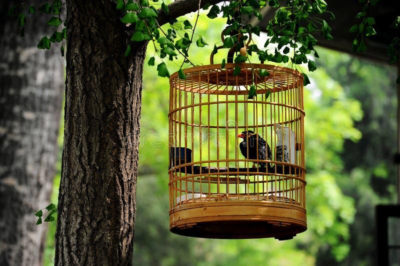 Cage à oiseaux image stock
