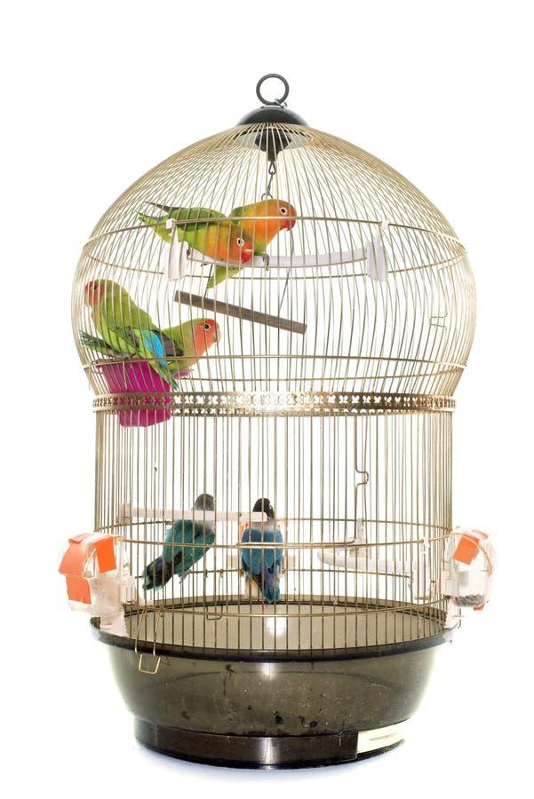 Cage avec la perruche photos stock