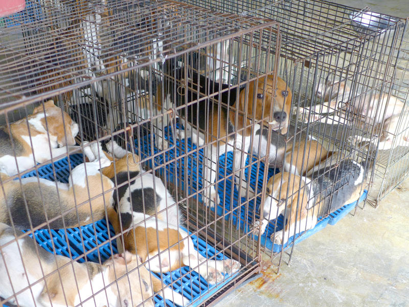 Cage de chien images libres de droits