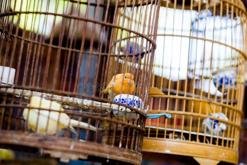 Cage du ` s de la Chine photo libre de droits