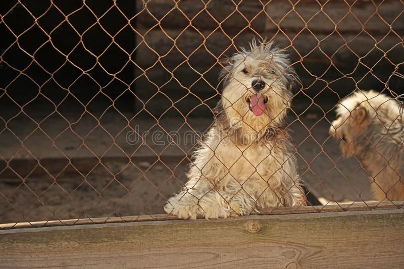Cage with homeless dogs in animal shelter. Concept of volunteering stock image