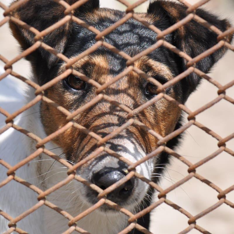 cage hunden royaltyfri foto