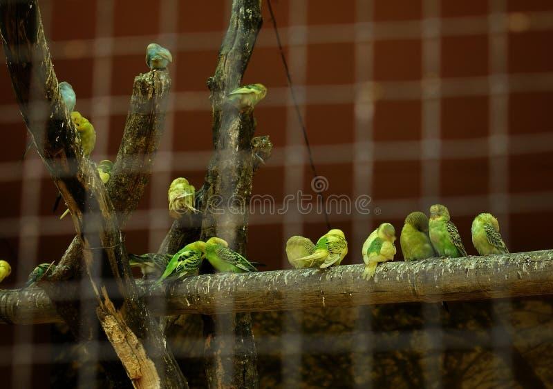 cage photo libre de droits