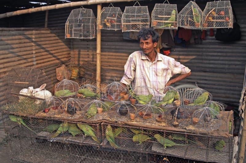 Caged Birds royalty free stock photo