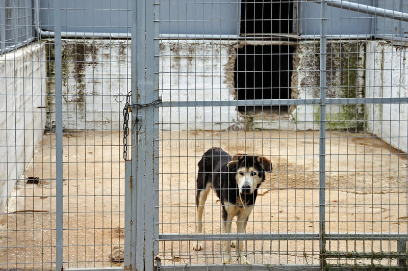 Caged dog stock photography