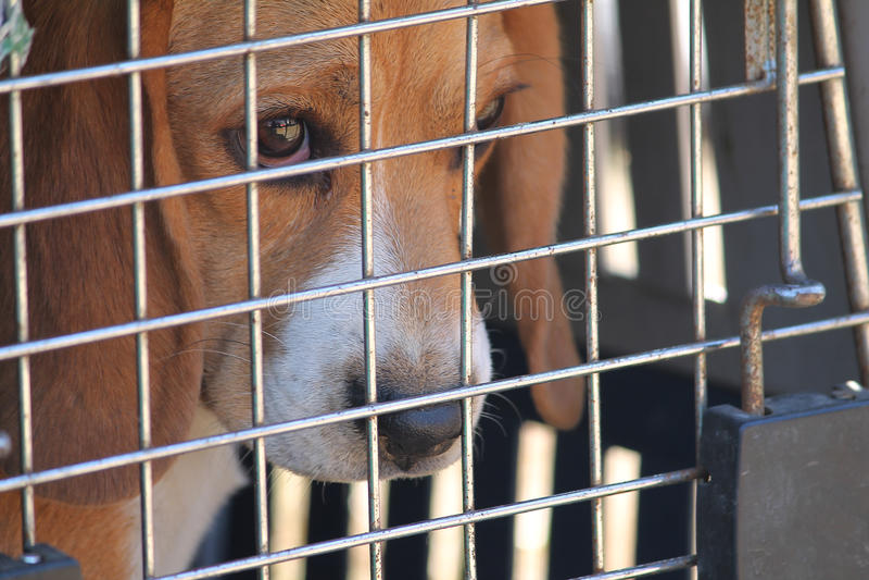 Caged dog stock photos