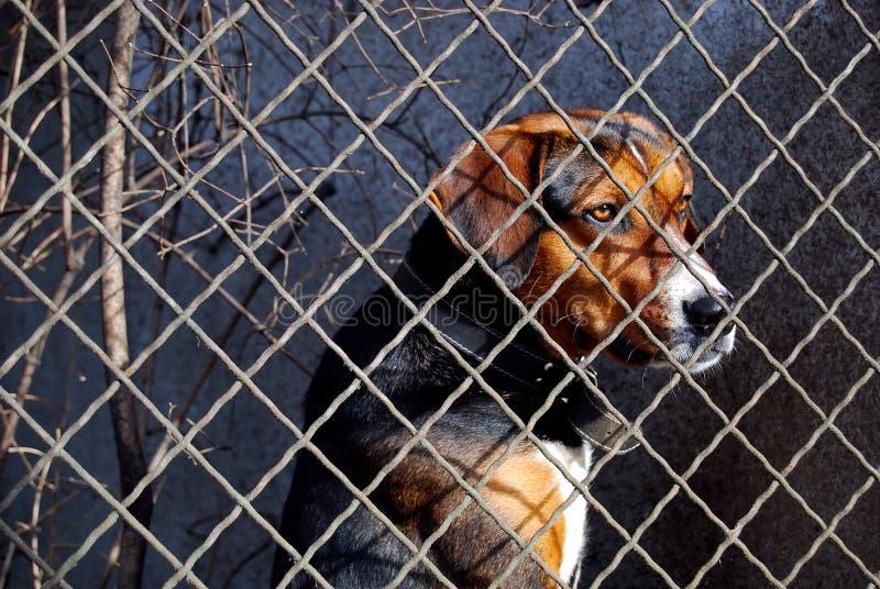 Caged dog stock image