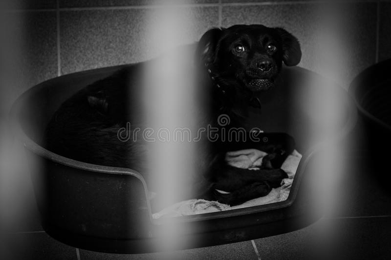 Caged dog in an animal shelter stock image