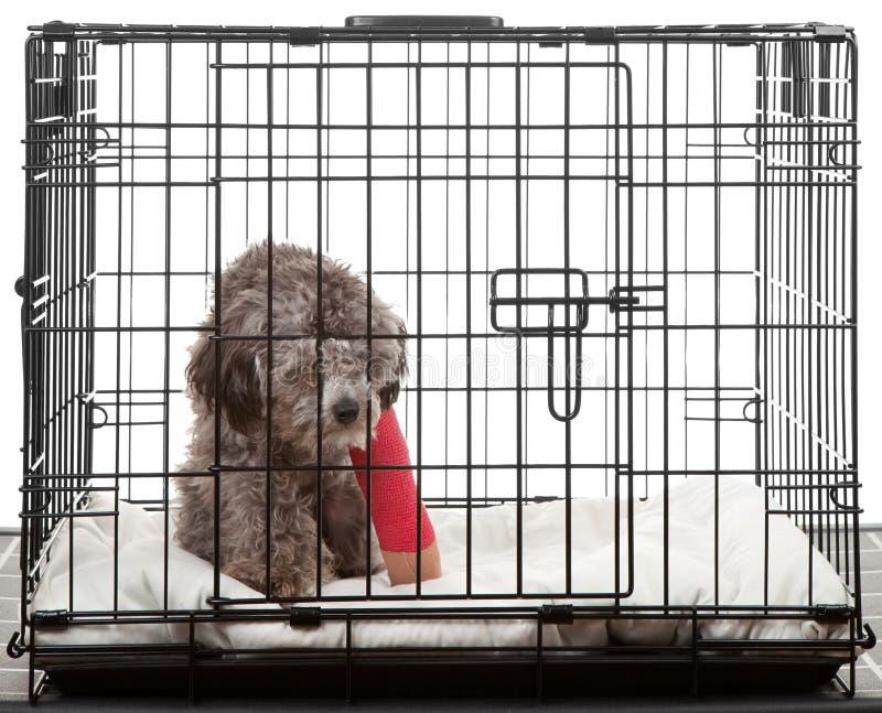 Caged dog with broken leg royalty free stock photos