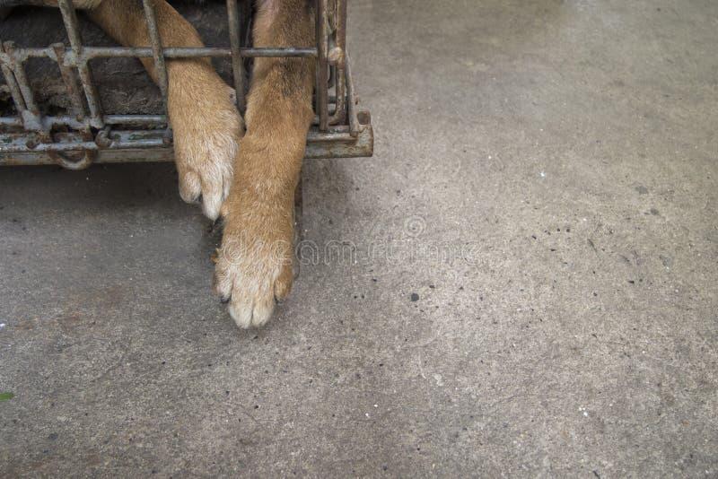 abandoned lonely dog caged leg close up stock photography