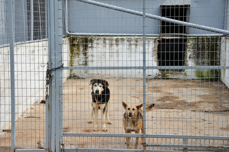caged hundar royaltyfri fotografi