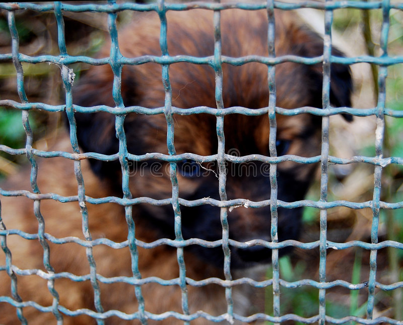 Download Caged puppy stock photo. Image of doggy, face, charity - 8008560