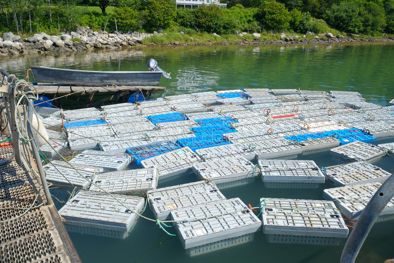 Cages de homard remplies de homard photographie stock