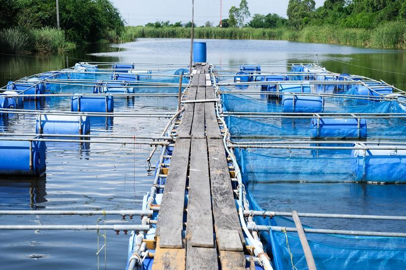 Cages for fish farm, aquaculture in thailand. Blue Cages for fish farm in pond, aquaculture in thailand, fish farming royalty free stock images