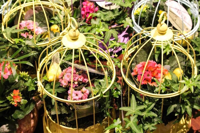 Cages of flowers display. Colorful plants blooms display floral look eyecatching beautiful full mass flowers nice spring merchandising stock images