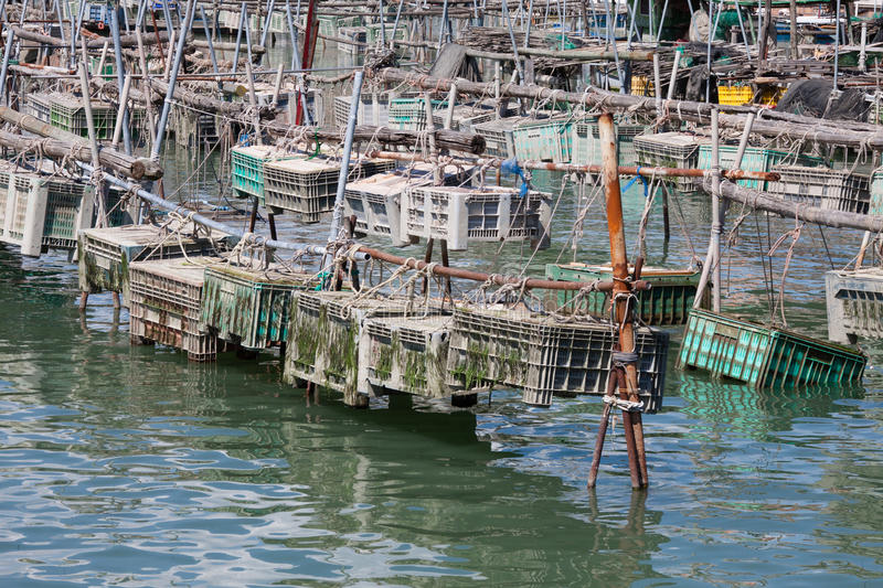 Cages for the harvesting of shellfish. Cages for shellfish fishing in Chioggia, the little Venice royalty free stock images