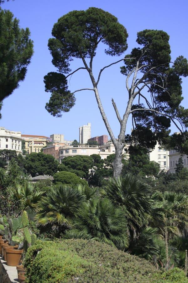 Cagliari ogrody botaniczne obraz stock