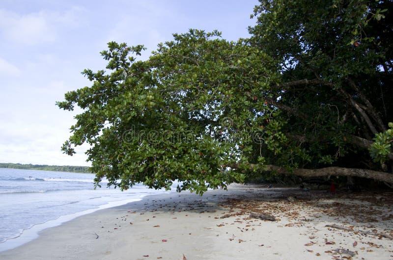 Cahuita国家公园海滩,哥斯达黎加 免版税库存图片