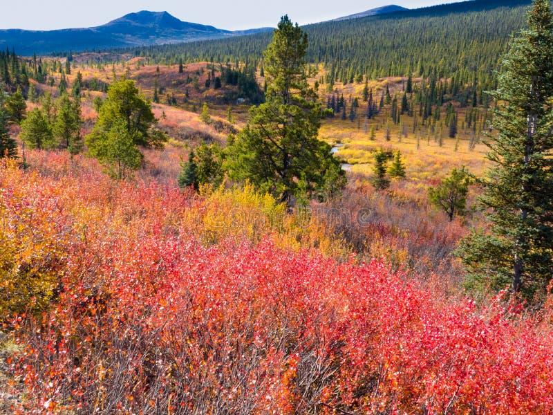 Caia na região selvagem do norte, Yukon T, Canadá fotografia de stock royalty free