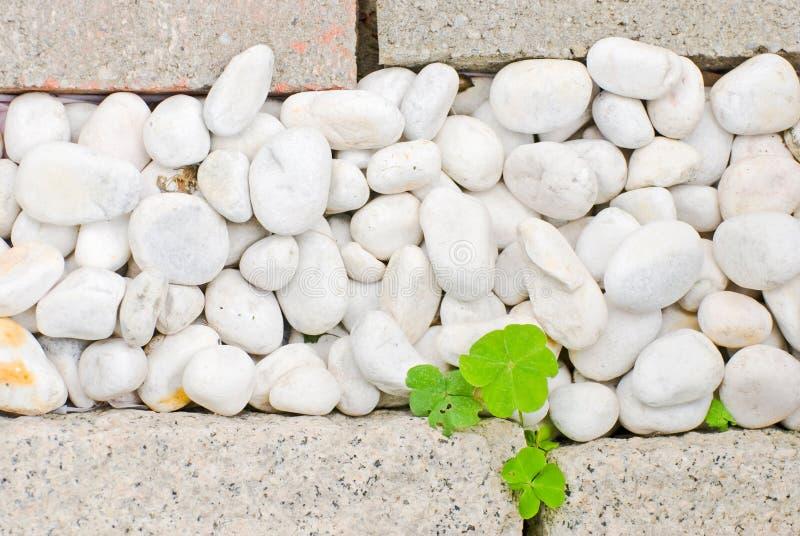 Caillou blanc avec la lame verte photo libre de droits