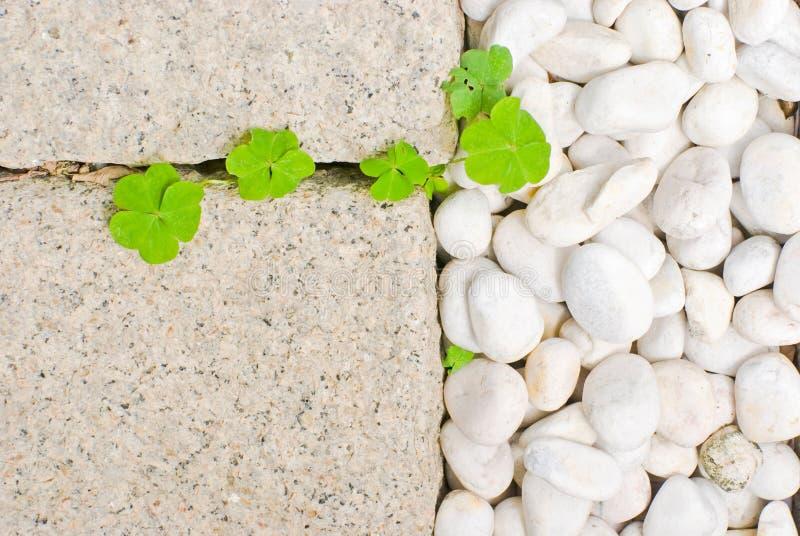 Caillou blanc avec la lame verte images libres de droits