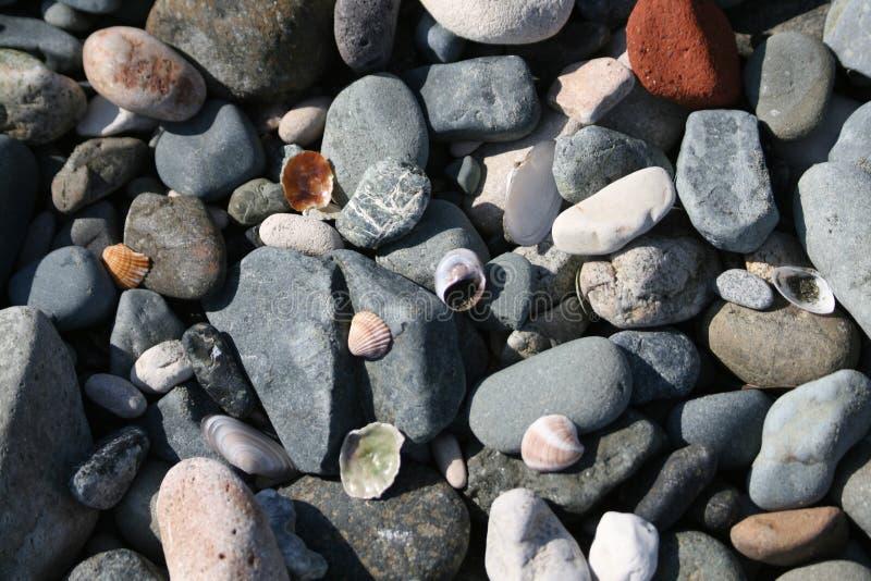 Cailloux et coquillages sur une plage de bardeau photographie stock